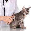 Ветеринарные клиники в Вилючинске